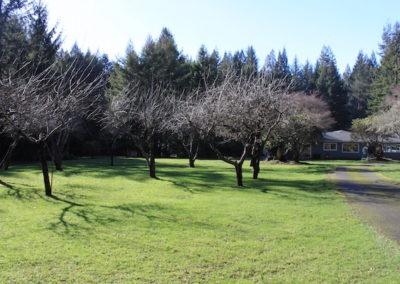 282 Orchard